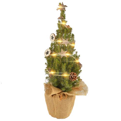 Канадская ель Коника 50-60 cм (подарочная елка) арт. 20 645